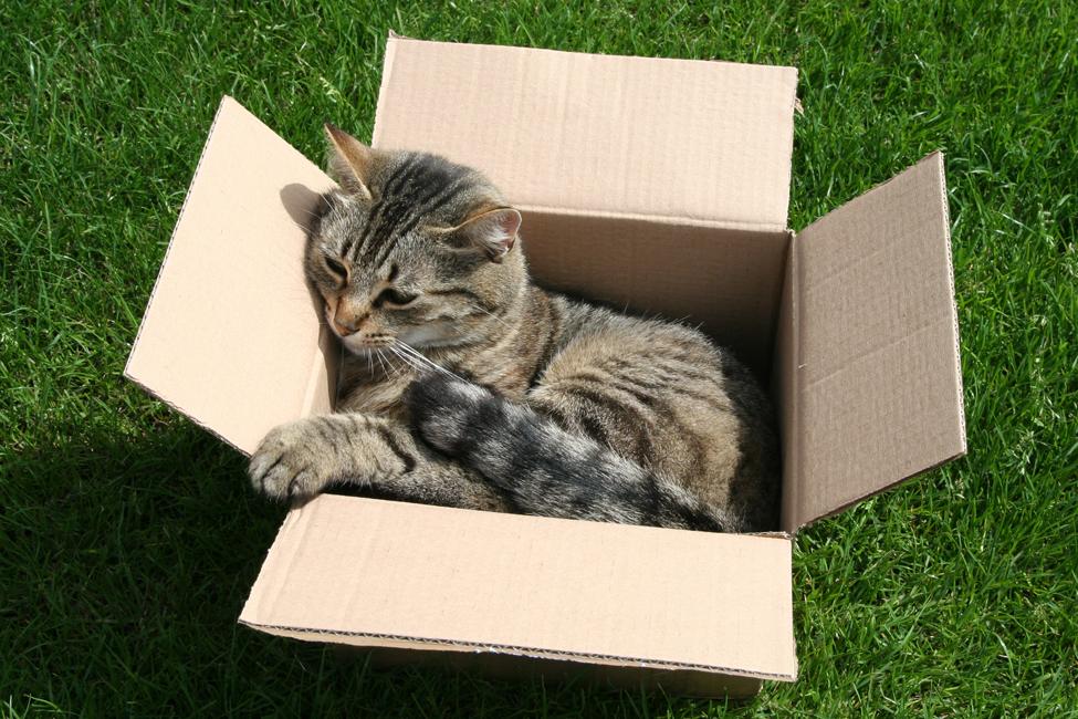 2533664443_8e3ce4dd2e_o Tips For Moving With Pets Orlando | Central Florida