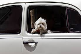 dog Tips For Moving With Pets Orlando | Central Florida